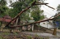Пять человек пострадали из-за падения дерева во Львовской области
