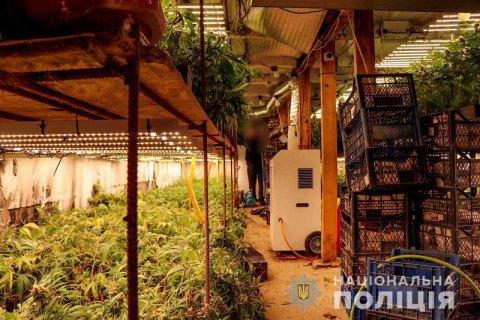 На Закарпатті поліція виявила дві підземні плантації з елітною коноплею на 5 млн гривень