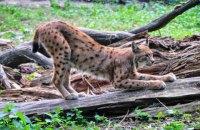 Киевский зоопарк рассчитывает на членство в EAZA после реконструкции