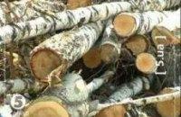 """Возле метро """"Дарница"""" снова вырубили деревья"""