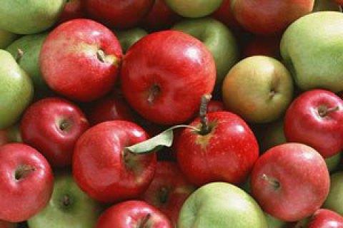 Германские фермеры отыскали замену рынку РФ — Продуктовое эмбарго