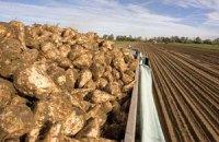 Урожай сахсвеклы упал на 40%