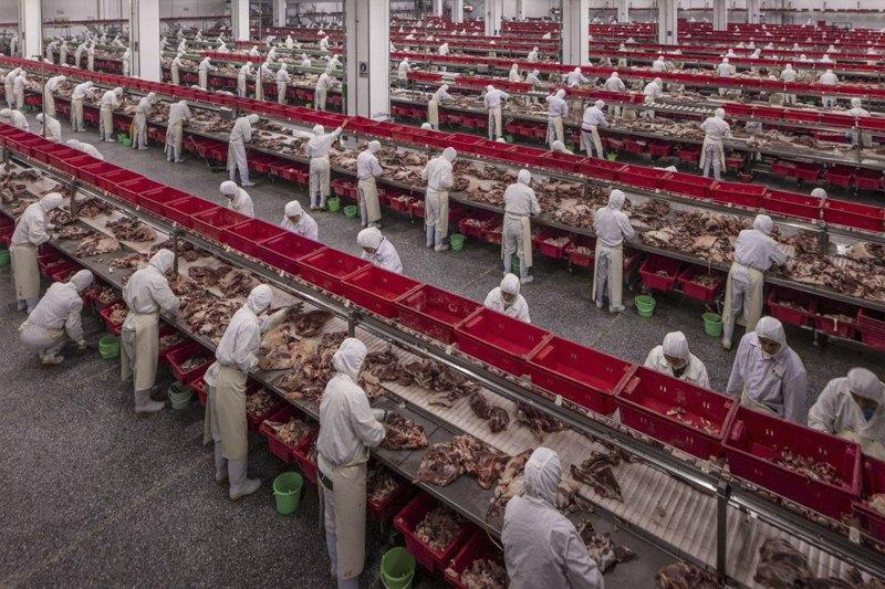 Мясная фабрика в Китае.