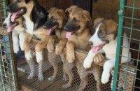 Киевсовет выделил 192 млн гривен на создание центра защиты животных