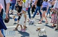 В Киеве прошел первый украинский парад собак породы джек- и парсел-рассел-терьер