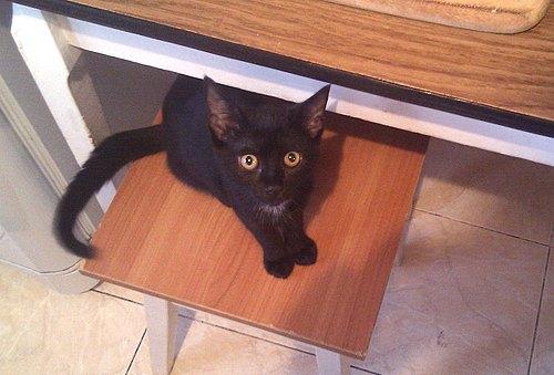Кішка Кора від читачки Дарії