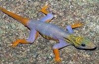 В Азии обнаружили рыбу-огурец и растения, которые едят крыс