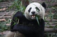 П'ятнична панда #103