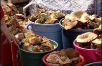 За збір грибів в Криму доведеться платити