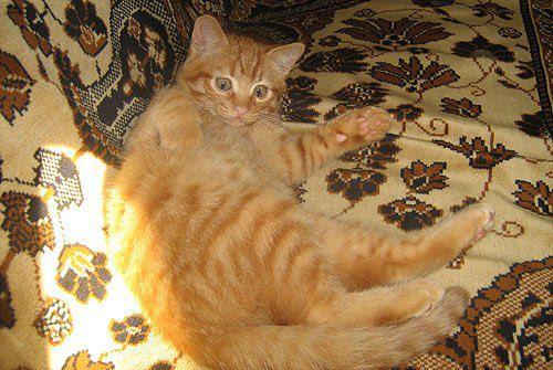 <<Маленький рыжачок Вася!>> Это фото от читателя под ником bras71. Фото котов Лели и Феликса на фото ниже тоже его авторства