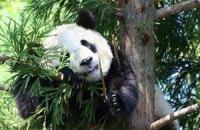Пятничная панда #65