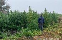 На Херсонщині двоє жителів Луганщини виростили конопель елітних сортів на $2 млн