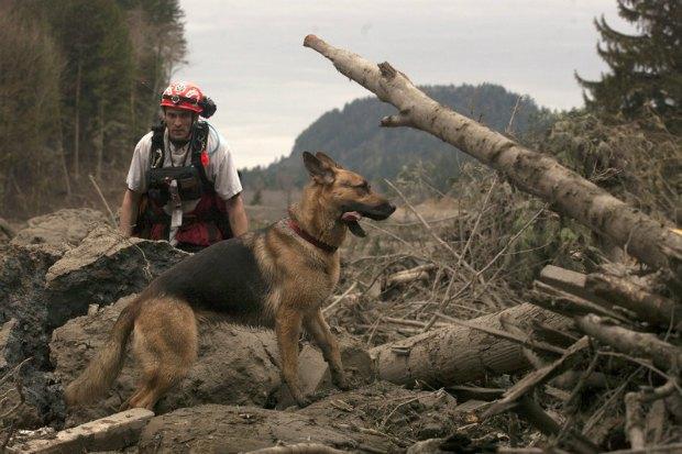 Поисково-спасательная команда работает в районе оползня