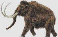 Канадские ученые хотят заселить Сибирь мамонтами