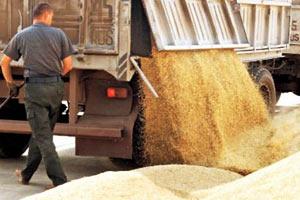 Цены на пшеницу обвалились ниже психологической отметки
