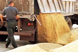 Мінагрополітики: Україна намолотила майже 25,3 млн тонн зерна