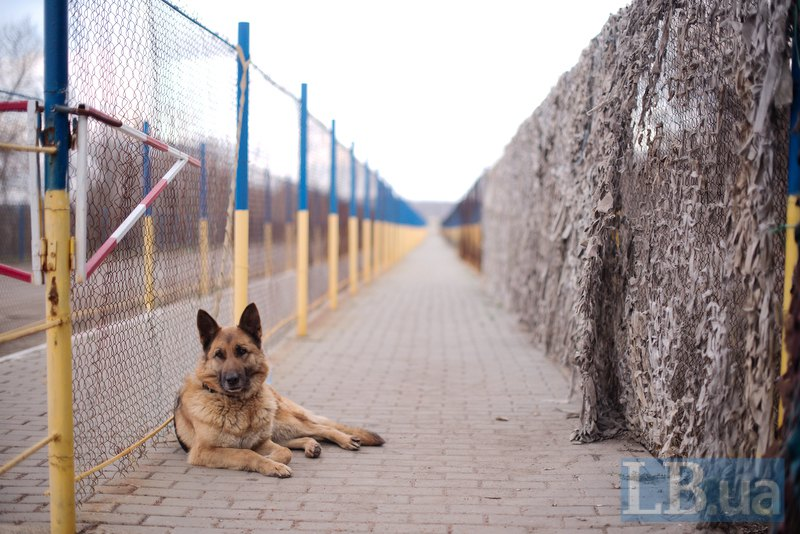 Восьмирічна вівчарка Берта - розшуковий собака. Берта навчена вистежувати людину