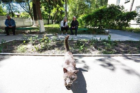 У Дніпрі бездомним котам забезпечили доступ до підвал і горищ