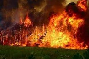 На Херсонщині пожежа знищила 500 га лісу