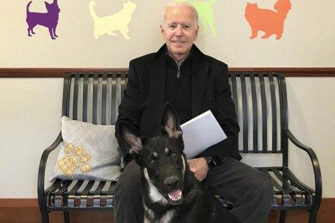 Собак Байдена вывезли из Белого дома, потому что одна из овчарок укусила охранника