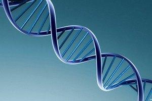 Алкоголь может вызывать необратимые повреждения ДНК