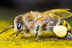Индийские солдаты пострадали от диких пчел