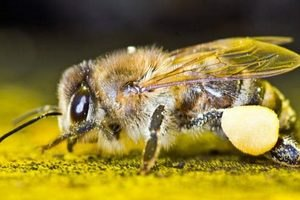 Таможенники не пустили в Украину российских пчел