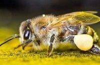 Митники не пустили в Україну російських бджіл