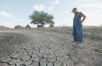 В Одесской области фермеры грозят перекрыть дороги, если государство не компенсирует убытки в связи с засухой