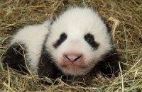 Пятничная панда #162