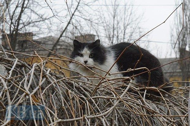 Кот на заборе неодобрительно наблюдает за нашими действиями в бане