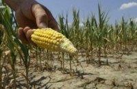 Південь України втратив половину врожаю зернових