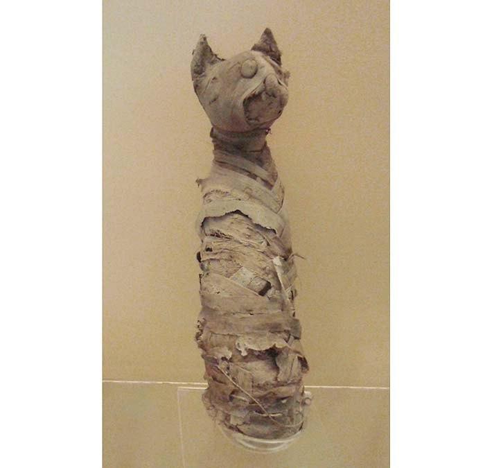 Мумифицированная кошка, Египет, Римский период, I ст. до н.э.