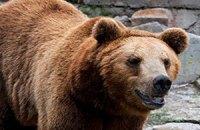 Любопытный медведь в Калифорнии забрался в машину и уехал