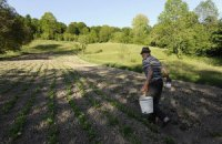 В Одессе выгоднее выращивать коноплю и мак, нежели картошку и свеклу