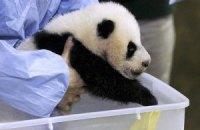 Пятничная панда #166