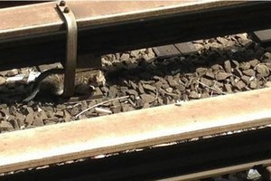 На Донбассе подорвали железную дорогу