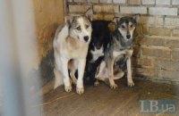В приюте для животных под Киевом голодают собаки