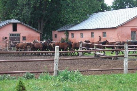 Директора державного конезаводу під Миргородом затримали за махінації з землею