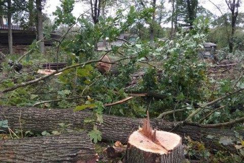 """Экологи предупреждают, что поправки """"Слуги народа"""" упростили вырубку лесов в Карпатах"""