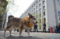 Владельцы собак потребовали у МВД заняться догхантерами