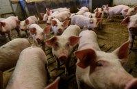 Рада приняла евроинтеграционный закон о ветеринарной медицине