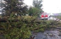 У Вінницькій області через падіння дерева загинула 29-річна жінка