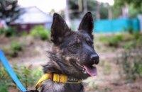 """Звільнений моряк Чуліба і собака з буксира """"Яни Капу"""" зустрілися після 10 місяців розлуки"""