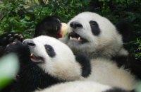 Пятничная панда #164