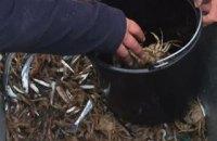 Пограничники задержали в Херсонской области морских браконьеров с уловом на 24 млн гривен