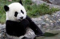 Пятничная панда #112