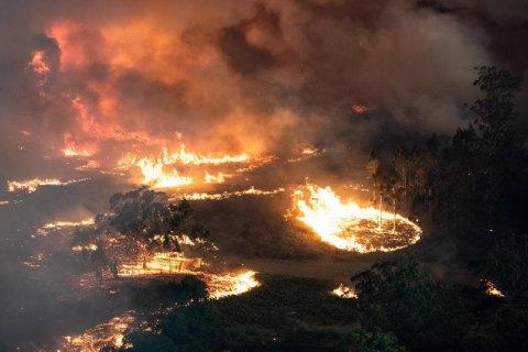 В столице Австралии из-за пожаров объявили чрезвычайное положение