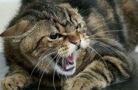 У Дніпровському районі Києва ввели карантин через сказ домашньої кішки