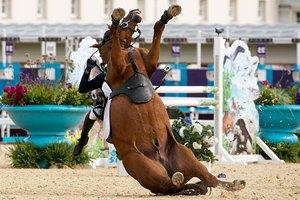 Grand National: у лошади при виде барьера не выдержало сердце